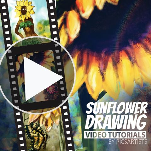 Sunflower time-lapse video