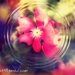 spring hellospring flower ripple watereffect