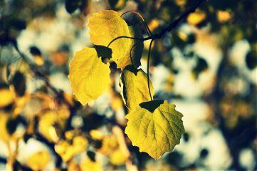 leaf nikon spring green color splash
