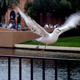 bird fly freedom orlando