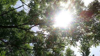 sun tree shadows photography
