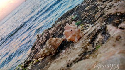 seaside beach photography shell seaside