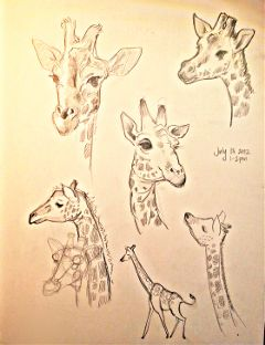 giraffes pets & animals pencil art drawing