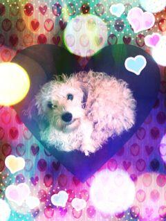 cutie pie pets & animals cute colorful blending