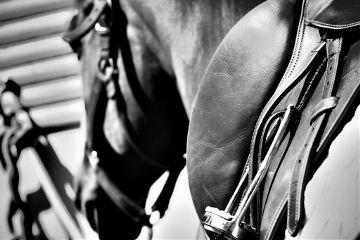 photography blackandwhite petsandanimals black horse
