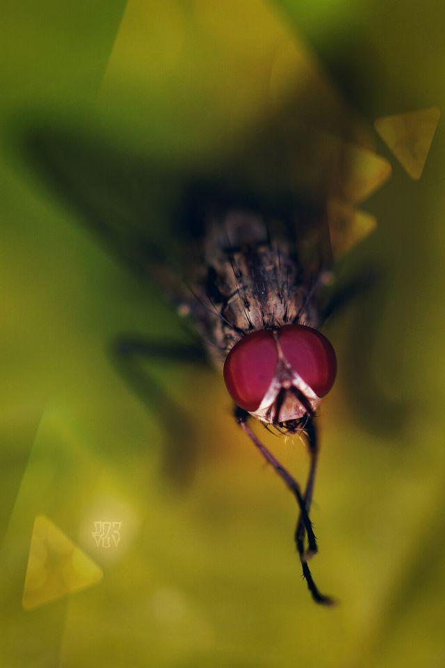 macro photography