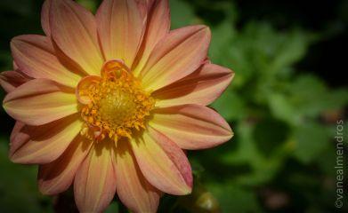 photography macro flower nature