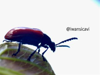 petsandanimals nature macro photography