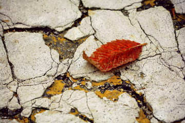 photography love fall
