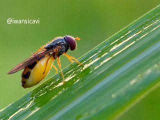 macro petsandanimals nature photography