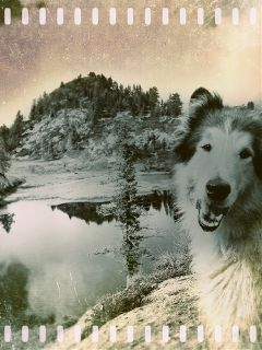 petsandanimals dog mansbestfriend mountains lake