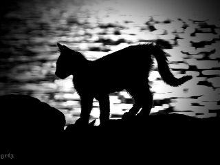 emotions black photography petsandanimals seaside