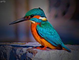 petsandanimals love colorful photography