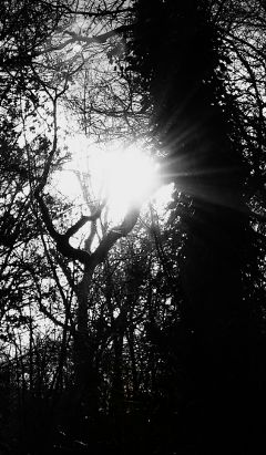 blackandwhite waplensflare park trees sun