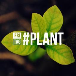 dailytag plant
